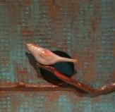 Bird Box 2011