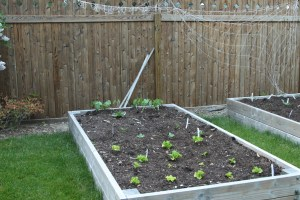 life lessons from gardening