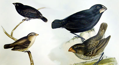 Audubon finches