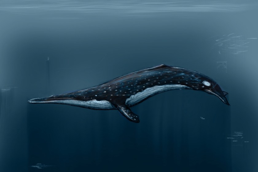 You or I would fit nicely in its mouth. Fortunately, we're far larger than the stuff baleen whales eat.