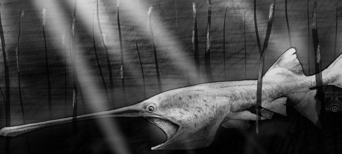 The Paddlefish Has a Real Weird Face.