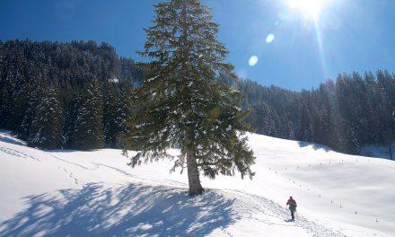 Frühlingshaft warme Schneeschuhwanderung auf dem Wirzweli, 24. März 18