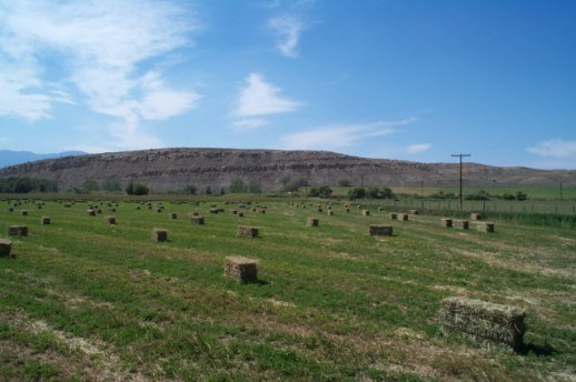 Square bales of alfalfa in a Montana field. Photo by Gary D. Robson.