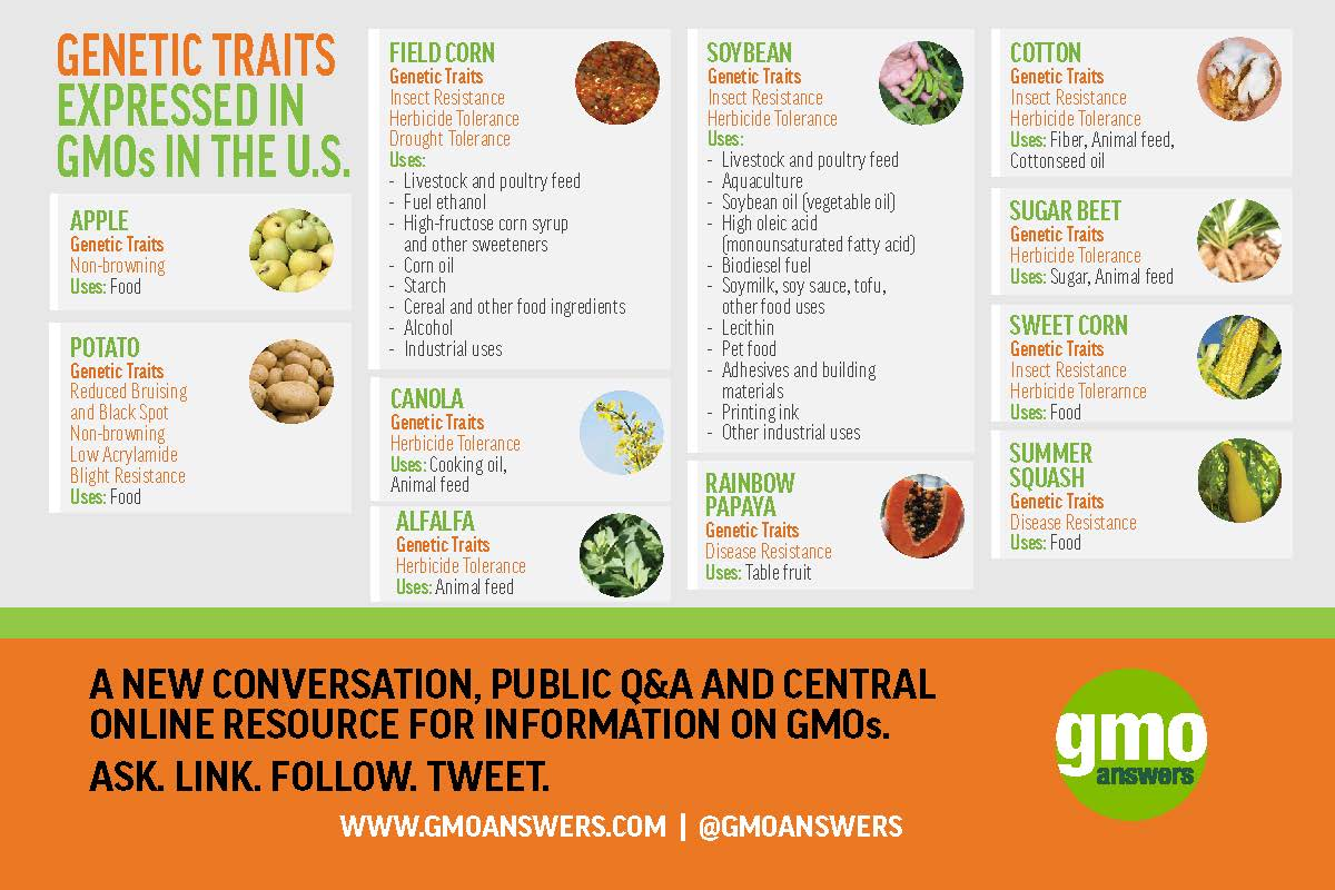 Gmo Examples And Their Impact On Our Food