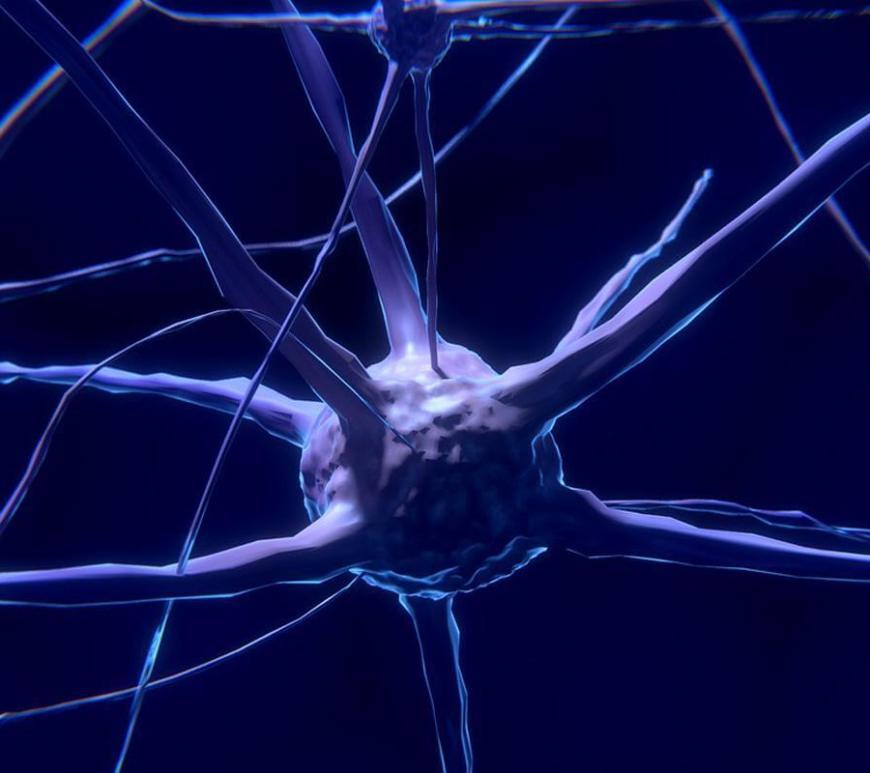 Giant Neurons Consciousness