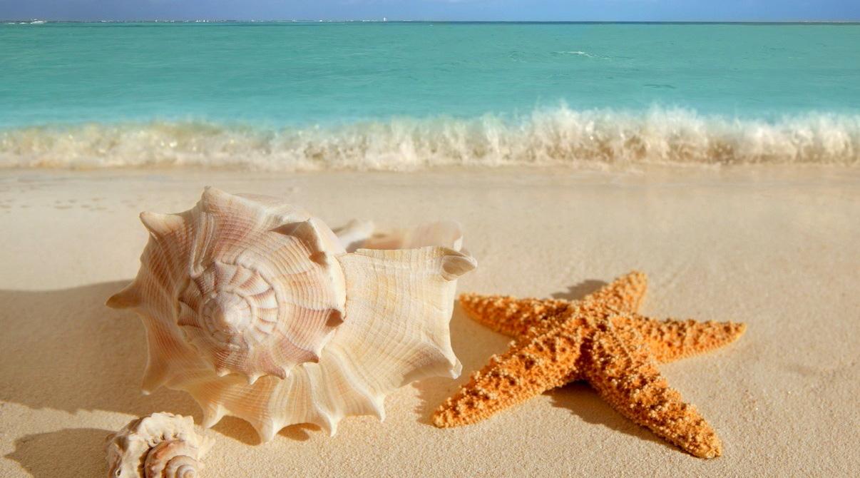 beach-main-slider