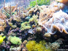 20050807-Aquarium 073