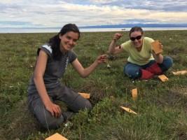 Taking tea bags our for the Tundra Tea Bag Experiment https://tundratea.wordpress.com/