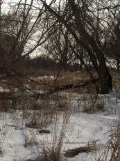 can you see my deer friend?