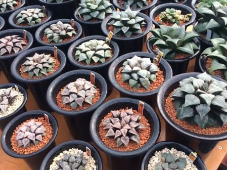 plantswork-3