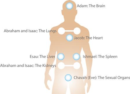 archetypes-and-anatomy