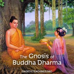 buddha250