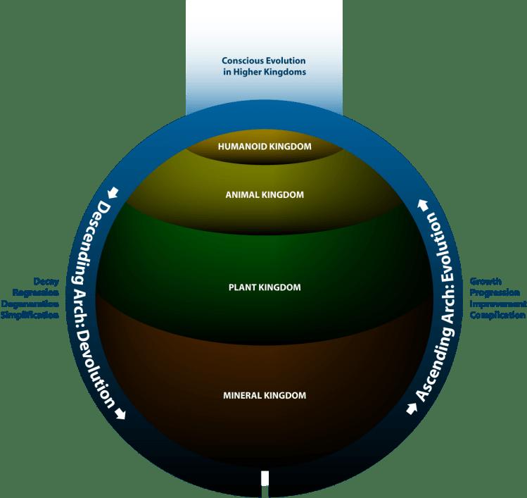 evolution-and-devolution-kingdoms