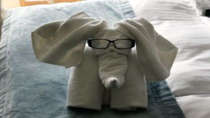 Each day, our towels are presented as animals - Lyn's glasses coming to good use.