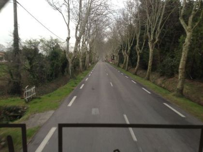 Tree lined road into Tarascon