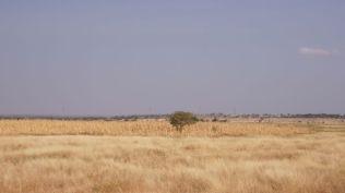 Far away plains