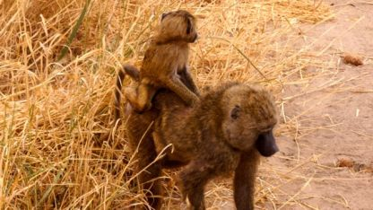 Ridin, monkey-boy