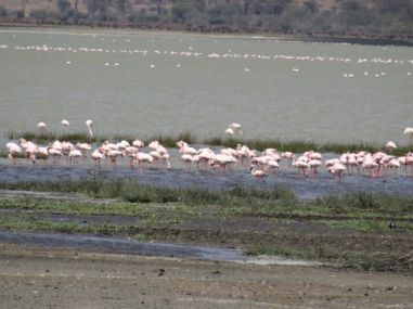 Pink Flamingo way way in the distance
