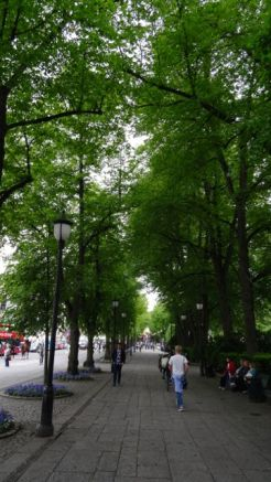 Lovely avenue