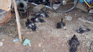 Ducks in waiting.