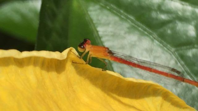 Interesting dragonfly.