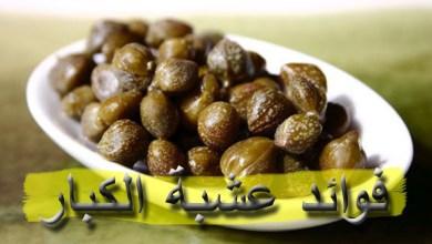 Photo of فوائد الكبّار (الشفلح أو القبار)