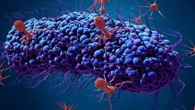 Photo of الفيروسات كائنات على حافة الحياة