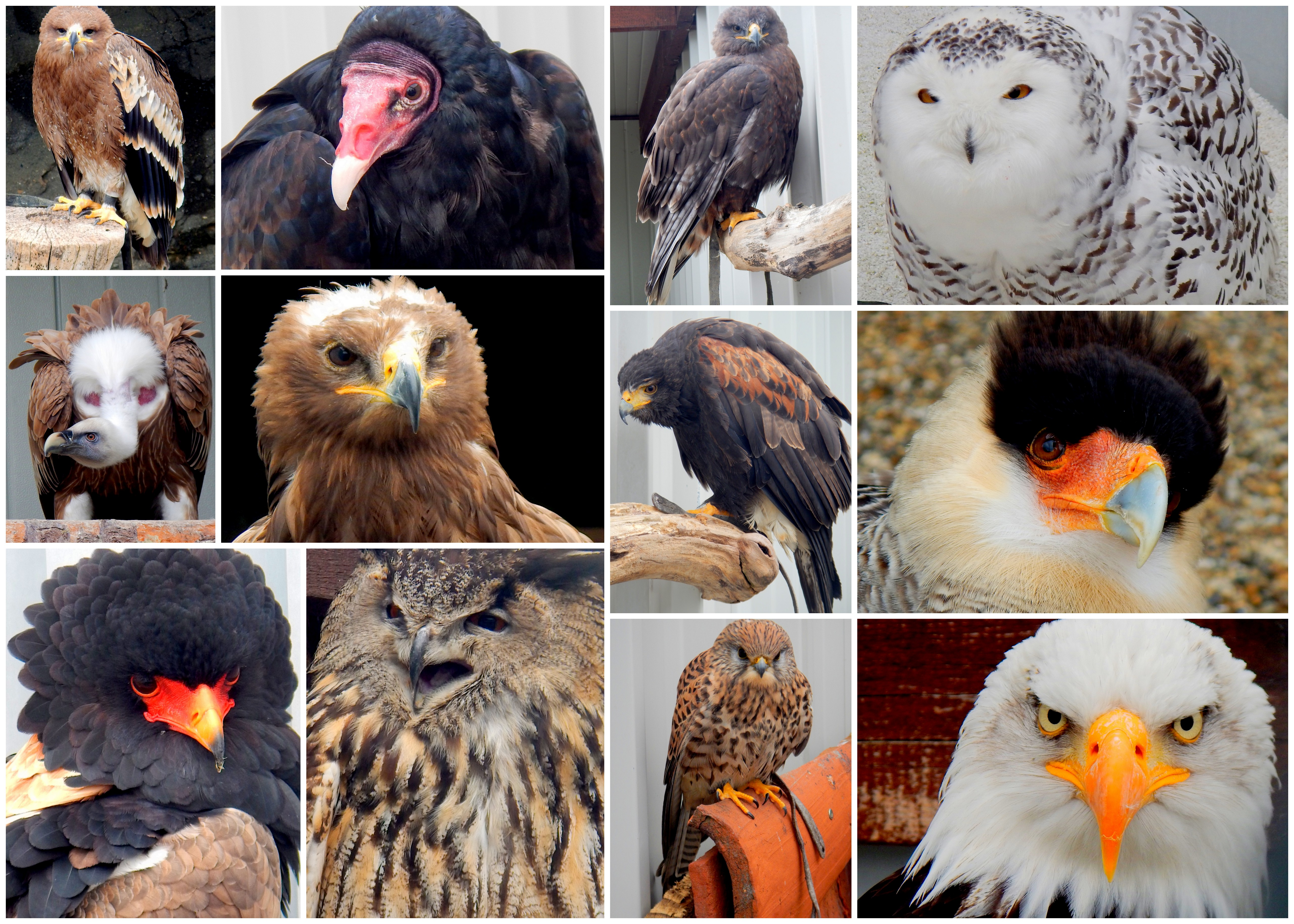 Some of the birds we worked with at Riegersburg Falconry, Austria