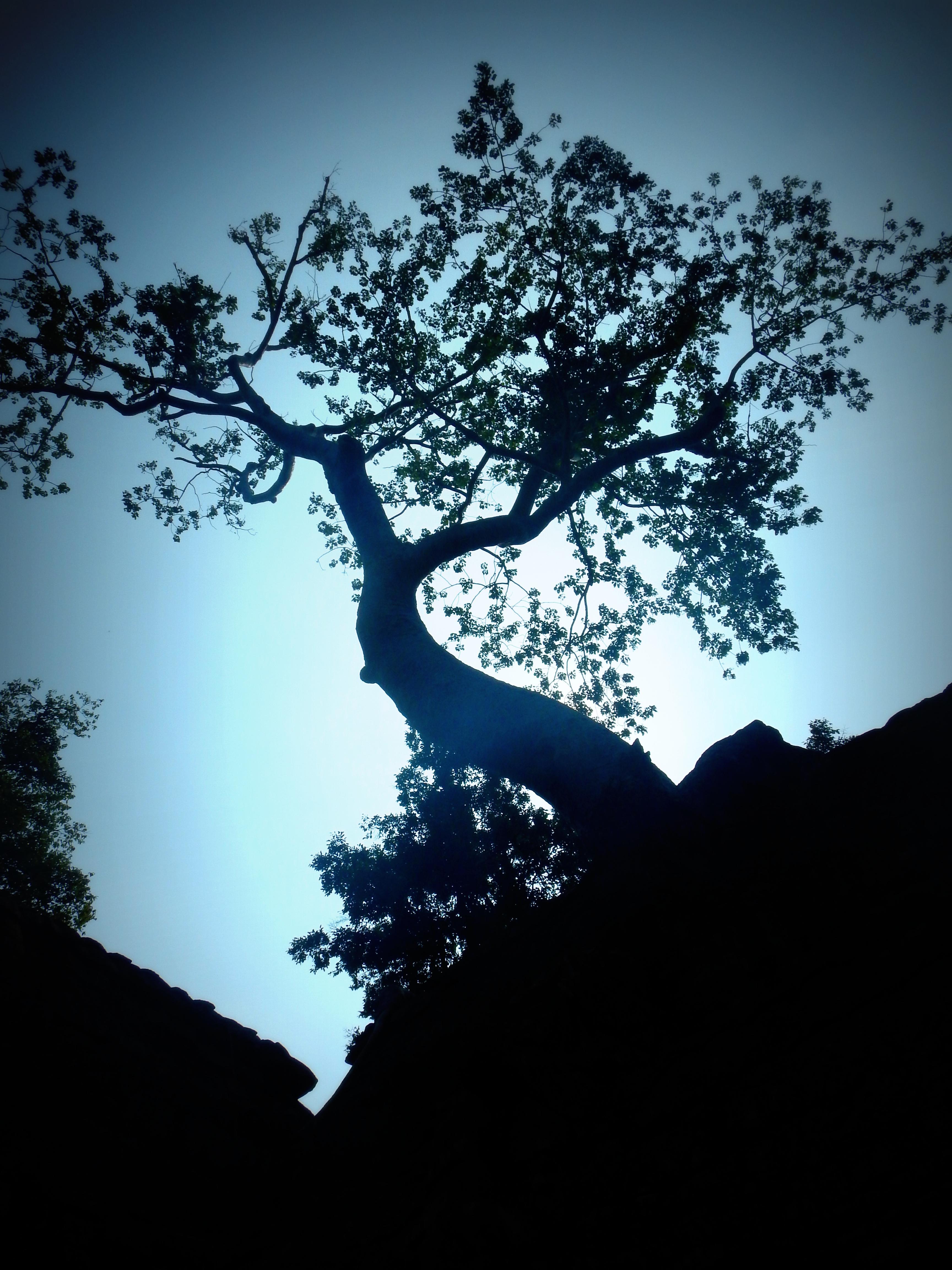 The ancient trees of Ta Prohm Cambodia