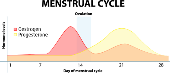 How The Pill Can Seriously Affect A Woman's Health - The Normal Menstrual Cycle