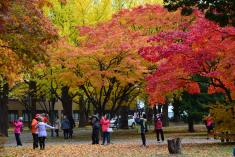 Autumn leaves at Hokkaido univ.