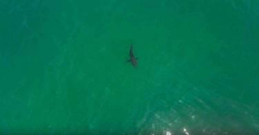 Cápák és drónok
