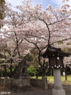 Shrine,Jinjya,Gokoku,Shizuoka,Japan,Sakura,sightseeing,triptojapan,japantrip,go2japan,forest,peaceful,woods,