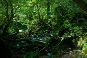 屋久島(YAKUSHIMA)