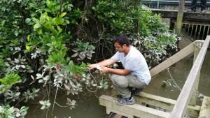 Mai Po Wetlands Research