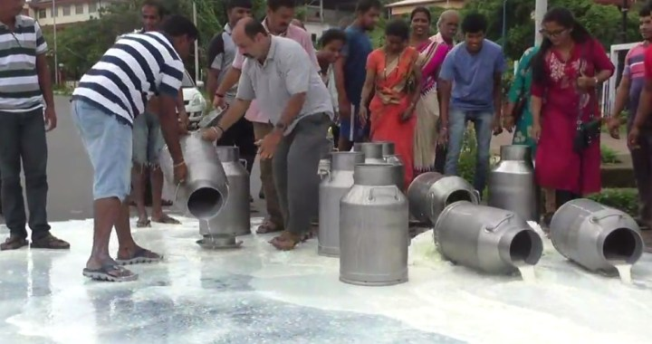 DAIRY FARMERS POURS 100'S OF LITRE'S OF MILK ON ROAD TO PROTEST AGAINST SAMUL PLANT IN GOA