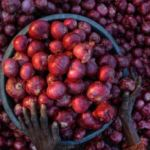 GOA GOVT DECLINES TO PROVIDE SURPLUS SUBSIDY FOR ONION PRICE HIKE