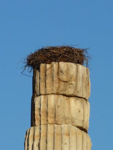 Stork nest, Temple of Artemis