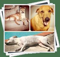 polaroid-alexdesigns-dogs Alex's 3 Dogs