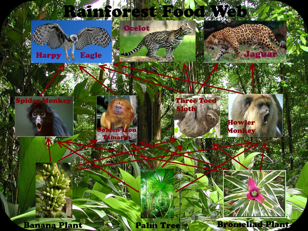 Organisms In The Rainforest