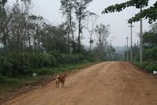 Straße zur Khe Sanh Combat Base