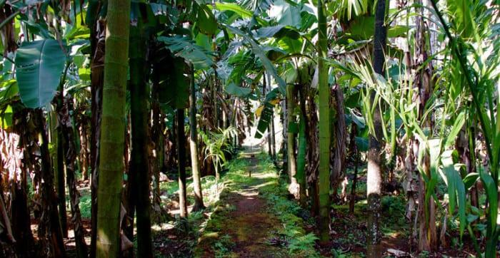 Sahakari Spice farm 1