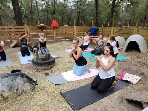 Goat Yoga Feb 2019 (102)