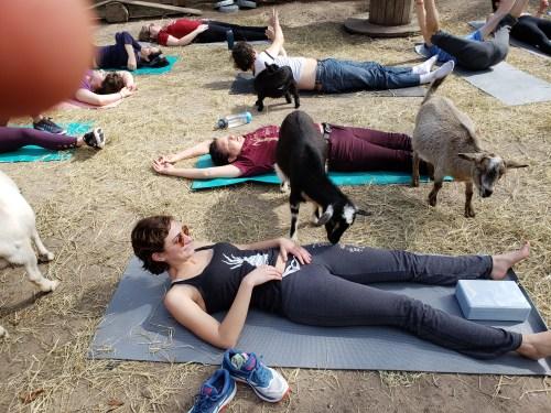 Goat Yoga Feb 2019 (11)
