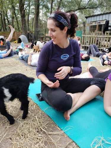 Goat Yoga Feb 2019 (3)