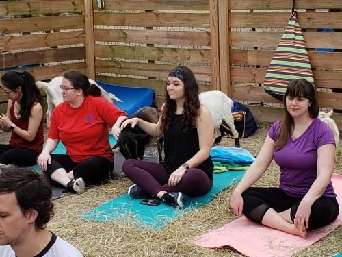 Goat Yoga Feb 2019 (72)