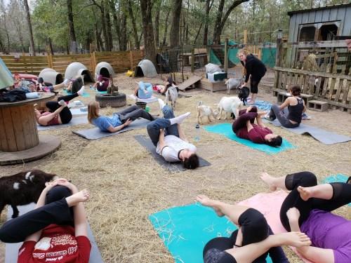 Goat Yoga Feb 2019 (95)