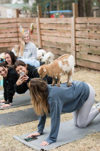 Goat Yoga-22