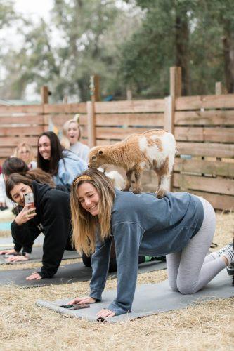 Goat Yoga-23