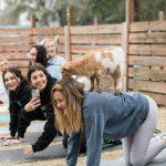 Goat Yoga-24